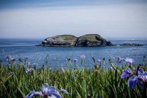 Newfoundland: Ghost Towns, Puffins and Unspoiled Views